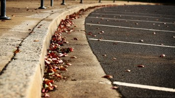 Fallen Leaves wallpapers and stock photos