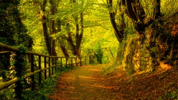 Autumn Forest Path wallpapers and stock photos