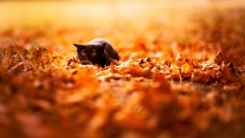 Cat on Fallen Leaves wallpapers and stock photos