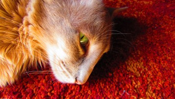 Cat's eye. wallpapers and stock photos