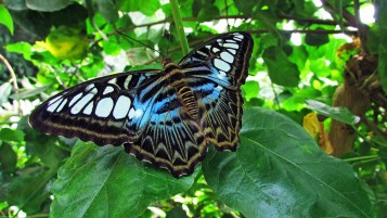 beautiful butterfly wallpapers and stock photos