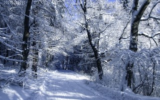 Snow Forest & Path wallpapers and stock photos