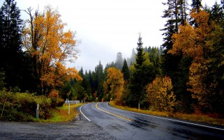 Fork Autumun Trees & Road wallpapers and stock photos