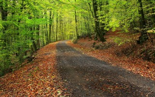 Forest Autumn Leaves & Path wallpapers and stock photos