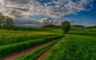 Fields Trees Path & Sky wallpapers and stock photos