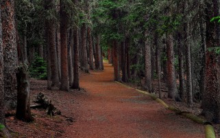 Deep Forest & Path wallpapers and stock photos