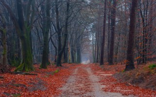 Previous: Forest Red Leaves & Path