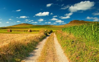 Maize Field Haybales & Path wallpapers and stock photos