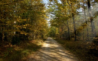 Autumn Forest Path Leaves wallpapers and stock photos