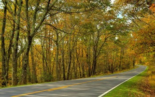 Yellow Autumn Trees & Road wallpapers and stock photos