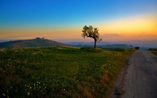 Mountains Sun Tree Way Grass wallpapers and stock photos