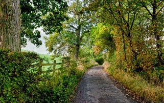 Small Path Trees Fences Plants wallpapers and stock photos