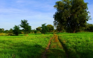 Trees Way Grass Fields wallpapers and stock photos