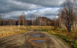Forest Road Puddle Fields wallpapers and stock photos