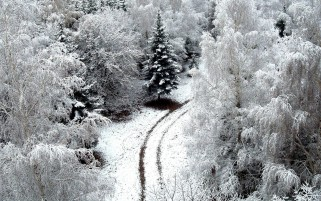 Snowy Forest Path Aerial View wallpapers and stock photos