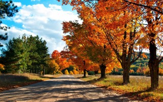 Autumn Trees Road & Sky wallpapers and stock photos