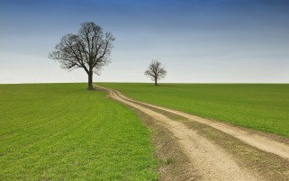 Grass Fields Trees Way wallpapers and stock photos