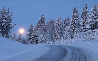 Random: Snowy Forest Road Moon Night
