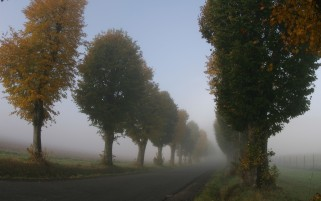 Random: Autumn Trees Road Foggy