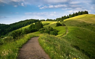 Awesome Hills Footh Path Trees wallpapers and stock photos