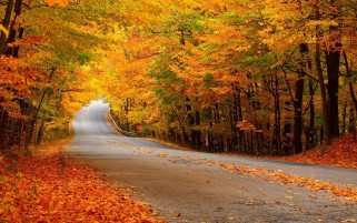 Autumn Thick Trees Road Leaves wallpapers and stock photos