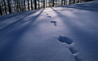 Snow Traces wallpapers and stock photos
