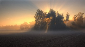 Foggy Morning wallpapers and stock photos