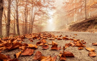 Forest Beech Leaves Road Foggy wallpapers and stock photos