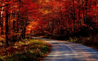 Random: Awesome Autumn & Road