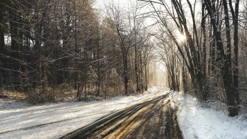 Forest Road Tracks & Snow wallpapers and stock photos