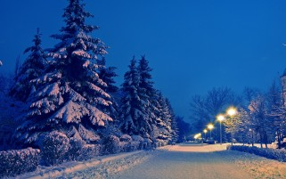 Snowy Trees Road & Lamps wallpapers and stock photos
