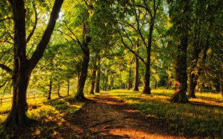 Trees Grass Path Roots Sun wallpapers and stock photos