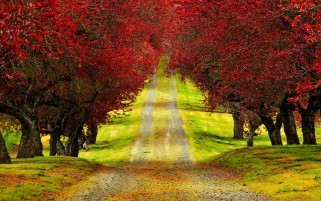 Red Trees & Path wallpapers and stock photos