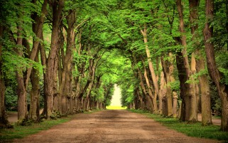 Random: Trees Alley Road
