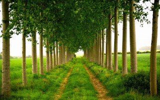 Tight Trees Road Grass Plants wallpapers and stock photos