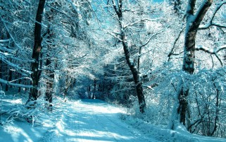 Frosty Trees Path & Snow wallpapers and stock photos