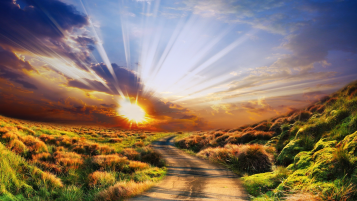 Powerful Sun Rays Road Plants wallpapers and stock photos