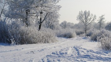 Snowy Path Trees Plants Trails wallpapers and stock photos