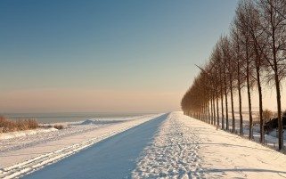 Snow Scenic Trails & Trees wallpapers and stock photos