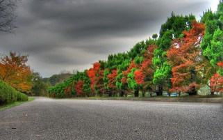 Colorful Autumn Trees & Road wallpapers and stock photos