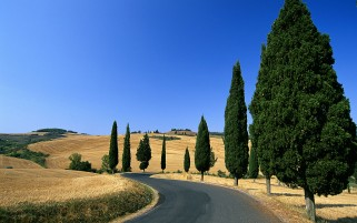 Field & Trees Italy wallpapers and stock photos
