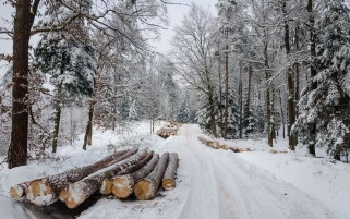 Previous: Winter Road Forest Timber