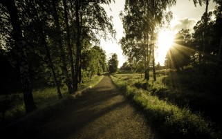 Birches Foot Path Grass Sun wallpapers and stock photos