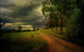 Storm Dirty Road Trees Plants wallpapers and stock photos