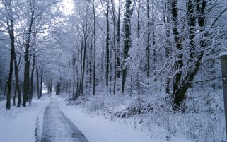 Winter Trees Road Plants Snow wallpapers and stock photos