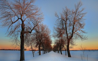 Lovely Bare Trees Winter Road wallpapers and stock photos