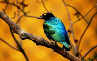 Aves de colores wallpapers and stock photos