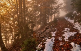 Foggy Autumn Forest & Path wallpapers and stock photos