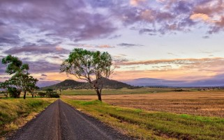 Fields Path Trees Purple Sky wallpapers and stock photos