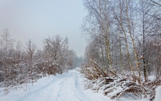Winter Forest Way Plants wallpapers and stock photos